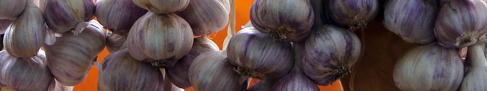 25th Annual Hills Garlic Festival