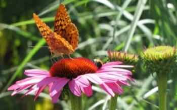 Bee Glade Farm & Nursery