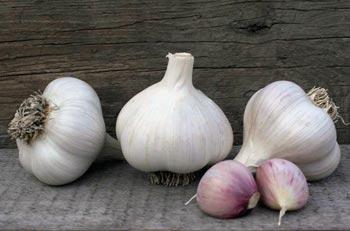 Rocky Ridge Farm Garlic